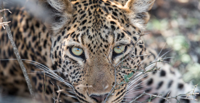 South Africa | Experience an amazing Safari in the Kapama Game Reserve