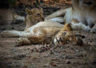Why you should do a safari